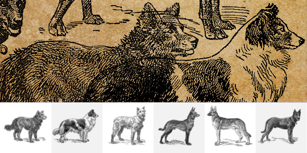 Vintage Illustrated Dogs Brushpack
