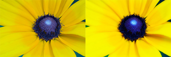 Adding a Diffuse Glow to Your Images