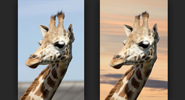 How to Remove a Background in Photoshop
