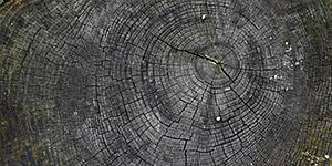 Cracked Old Stump Background