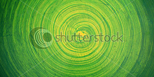Green Paint on Wall Background