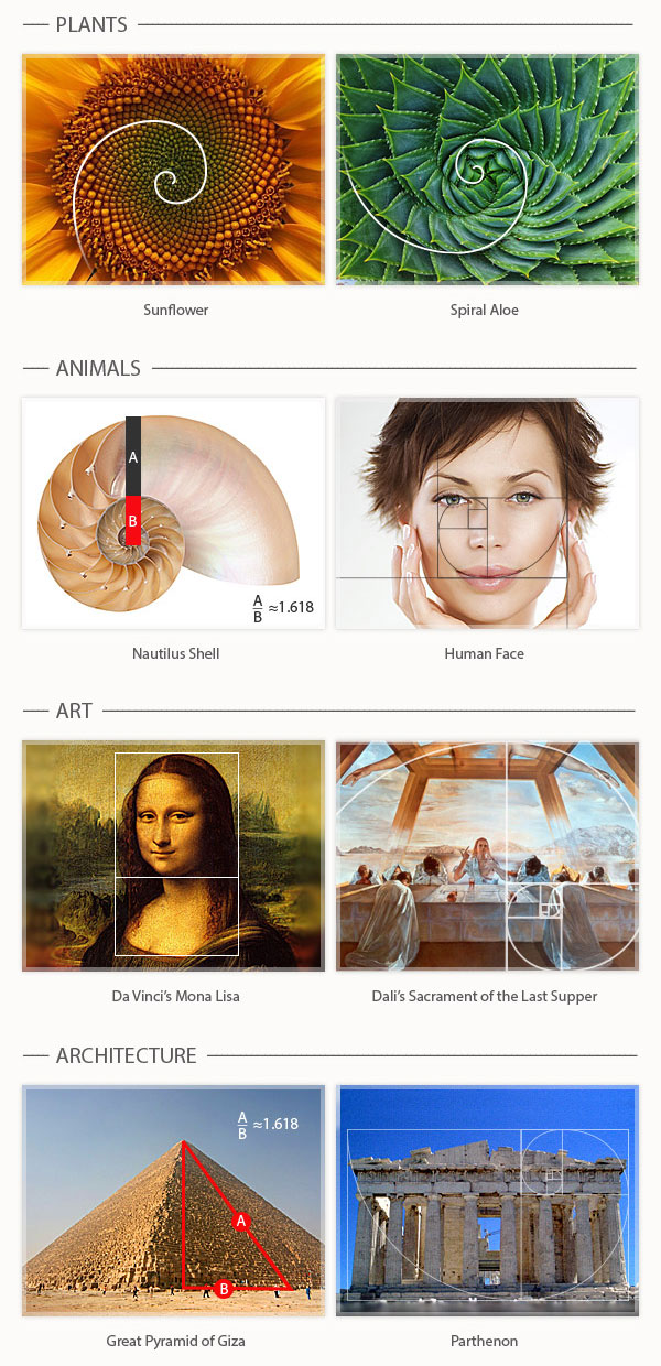 Examples of Golden Ratio in Nature and Art